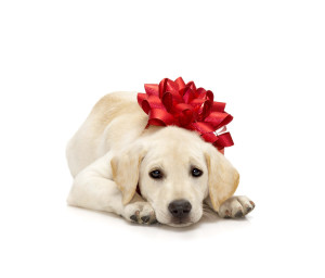 Puppy Wearing Bow